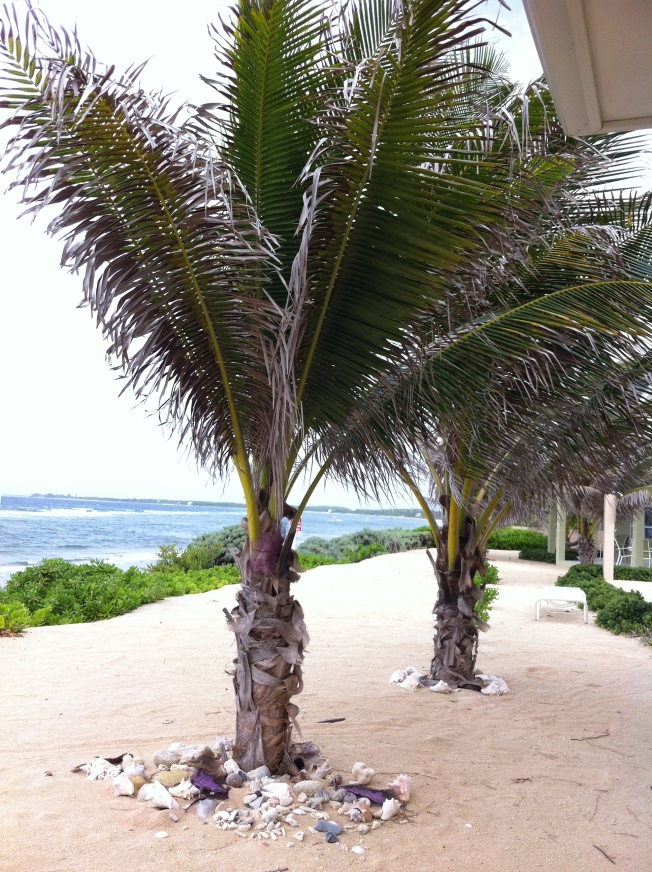 Palms by the sea...