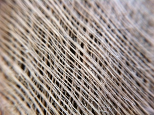 a closer look at the woven palm fibers (macro)