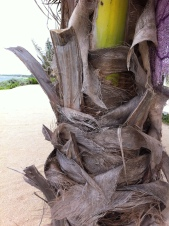 Memory of palm fronds...